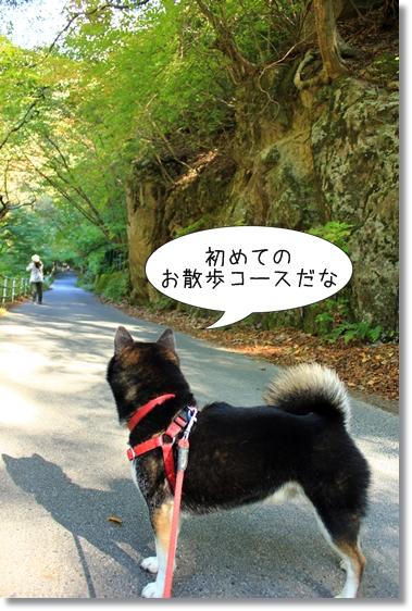 5_20121207021213.jpg