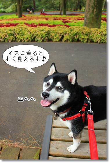 5_20121212165437.jpg