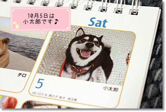 5_20121214023234.jpg