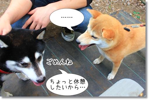 6_20120510021551.jpg