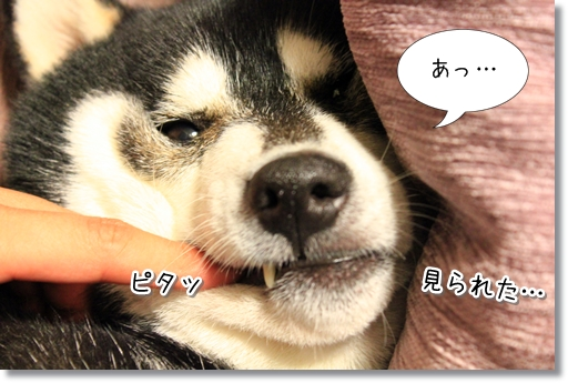 6_20120522044307.jpg