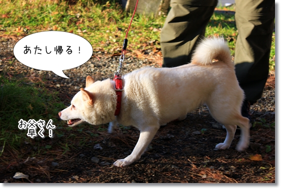 6_20121124015433.jpg