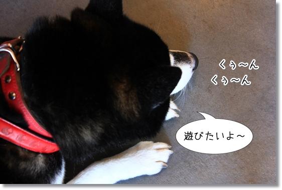 6_20130119123157.jpg