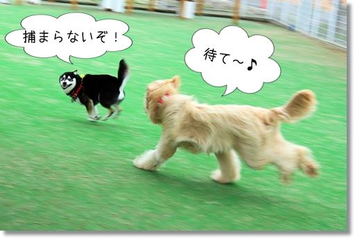 7_20120521014702.jpg