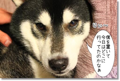 7_20120522045132.jpg