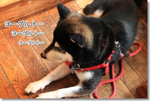 7_20120712131852.jpg