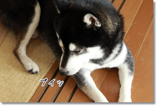 7_20120822132346.jpg