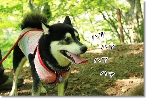 7_20120921114830.jpg