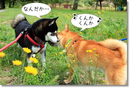 7_20121019031636.jpg