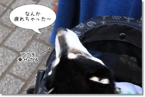 7_20121201121640.jpg