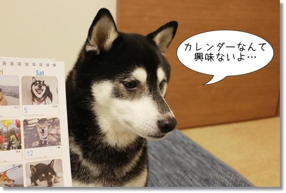 7_20121214025441.jpg