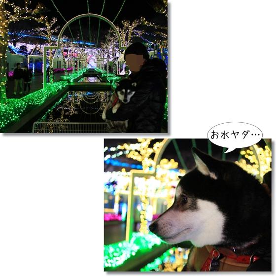 7_20130222080904.jpg