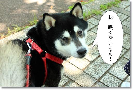 8_20120516152900.jpg