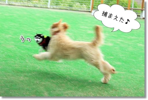 8_20120521014701.jpg