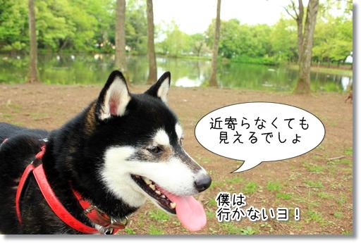 8_20120523031354.jpg