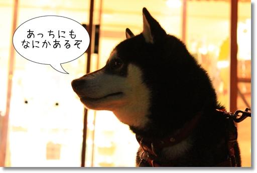 8_20120530030255.jpg