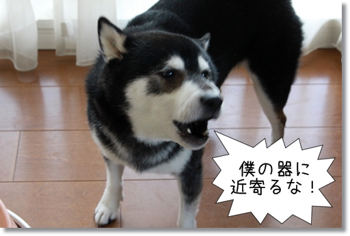 8_20120817163926.jpg