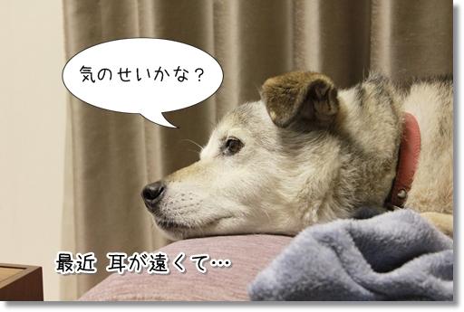 8_20120820160250.jpg