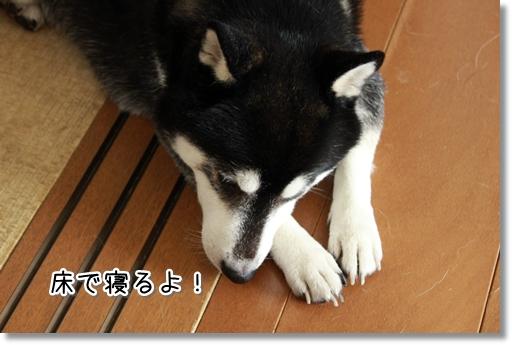 8_20120822132346.jpg