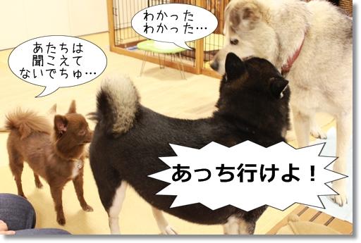 8_20120830104408.jpg