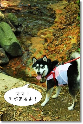 8_20120920143557.jpg