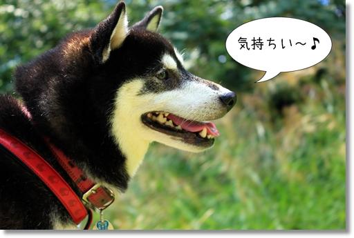 8_20121012014635.jpg