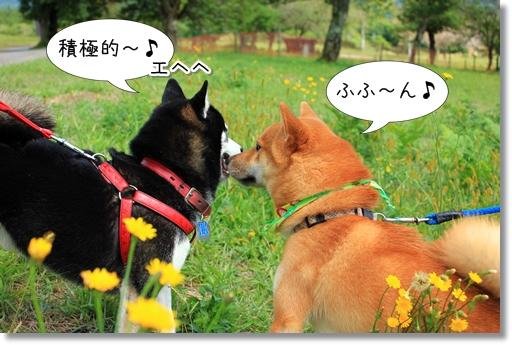 8_20121019031636.jpg