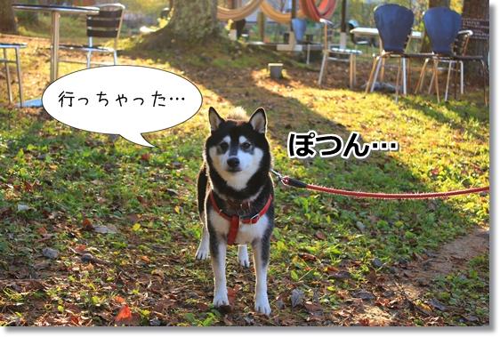 8_20121124020314.jpg