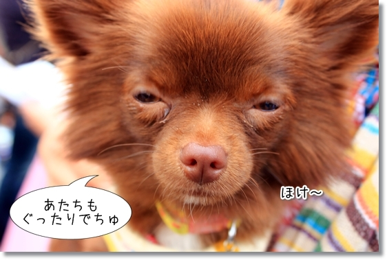 8_20121201122106.jpg