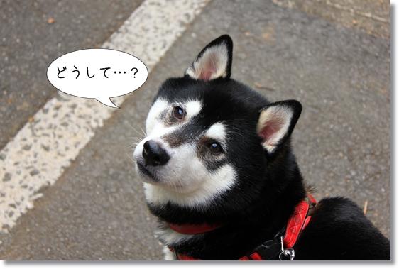 8_20121212171235.jpg