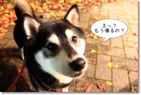 8_20121230101711.jpg