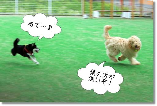 9_20120521014700.jpg