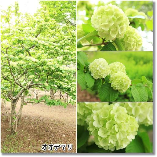 9_20120524030515.jpg