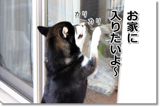9_20120815162001.jpg