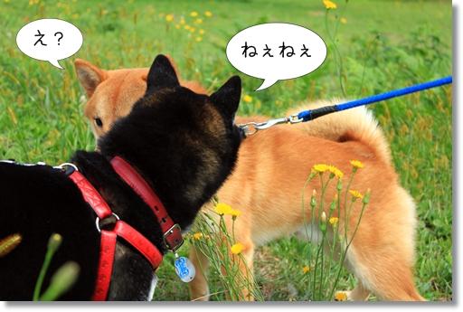 9_20121019031636.jpg