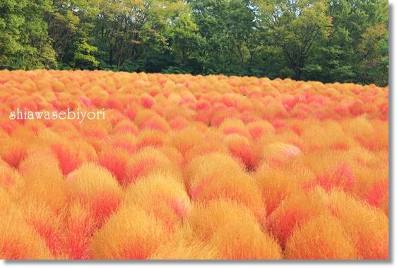 9_20121212171235.jpg