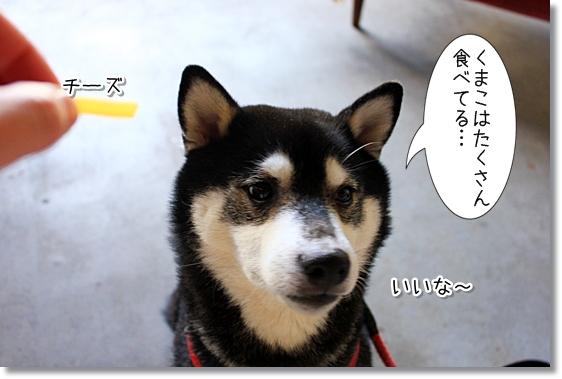 9_20121218140311.jpg