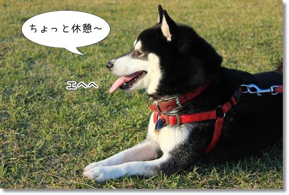 9_20121220033242.jpg