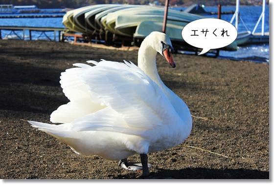 9_20121227074046.jpg