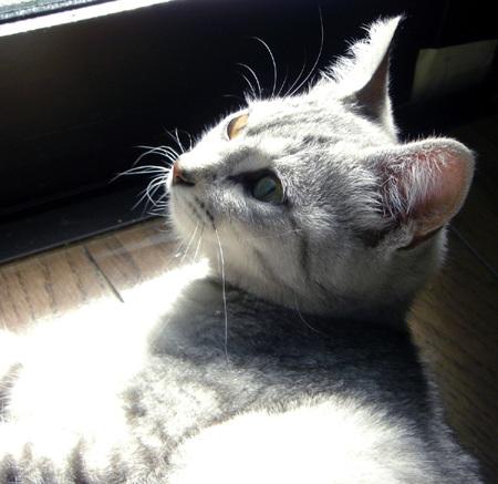 2009.03 (20)sakura
