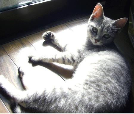 2009.03 (9)sakura