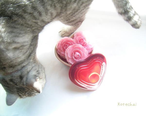 sakura_cat_猫_Kotechai.jpg アルバムに追加 乙女椿と乙女な桜, otometsubaki_otomesakura_Kotechai_01