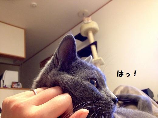 201211106.jpg