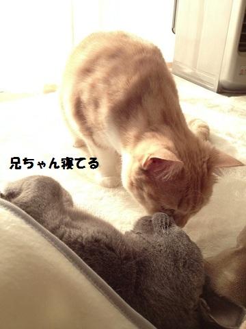 201211295.jpg