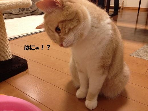 201303107.jpg