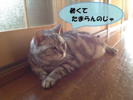 S_0000002542.jpg
