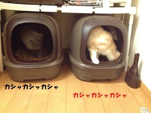 S_0000002936.jpg