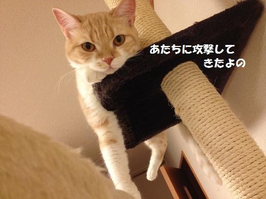 S_0000003023.jpg