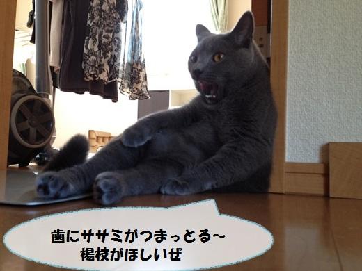 S_0000003695.jpg