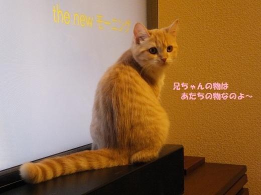 こてつ教室 ~柚子風味~